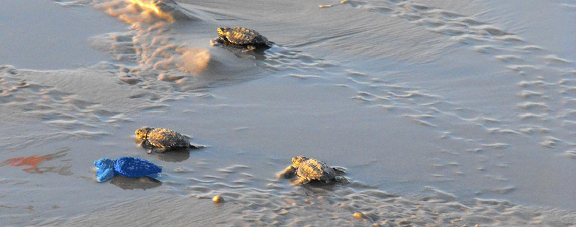 blOO Turtle